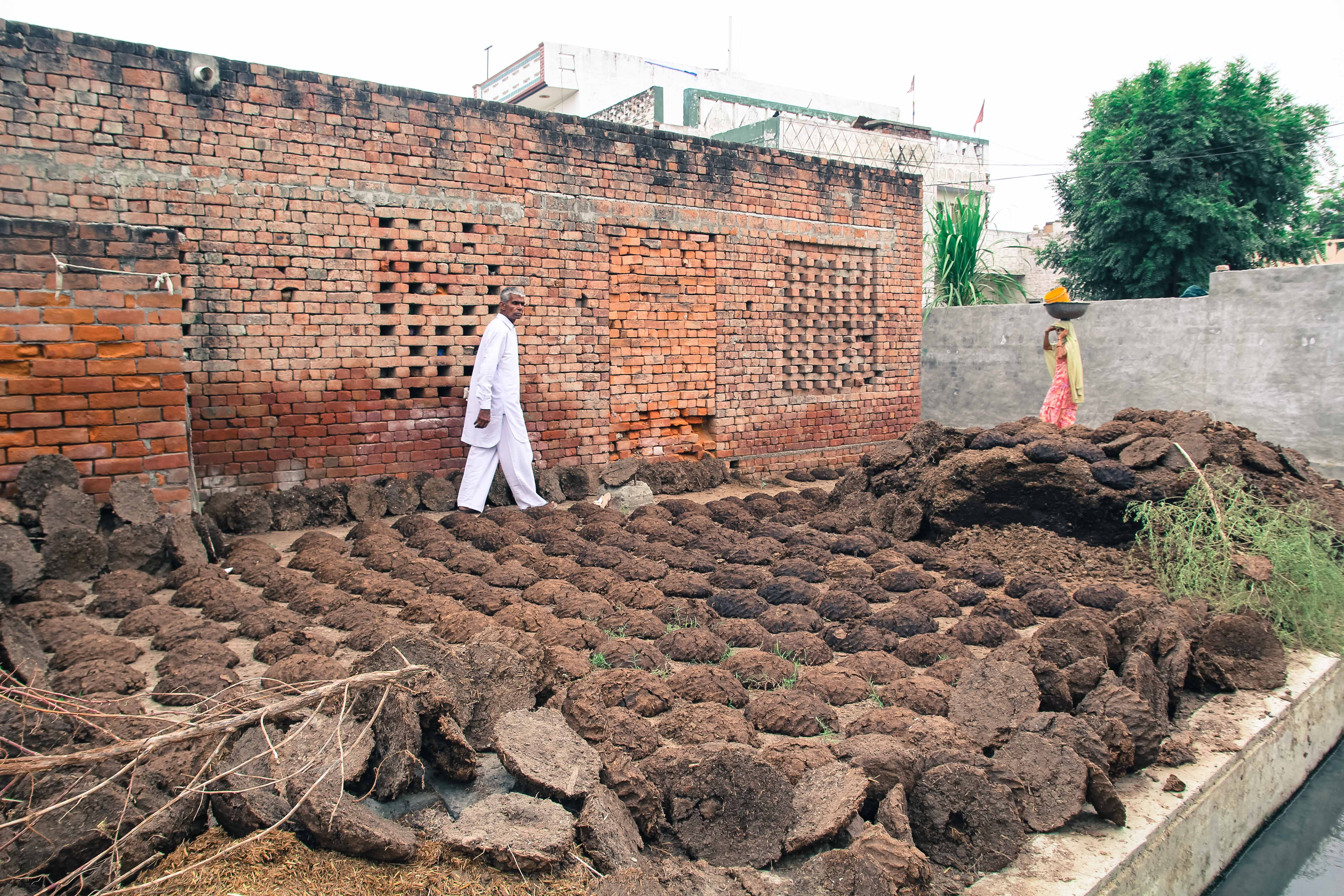Buffalo dung patties dry to be used for fuel in Hathlana, Haryana